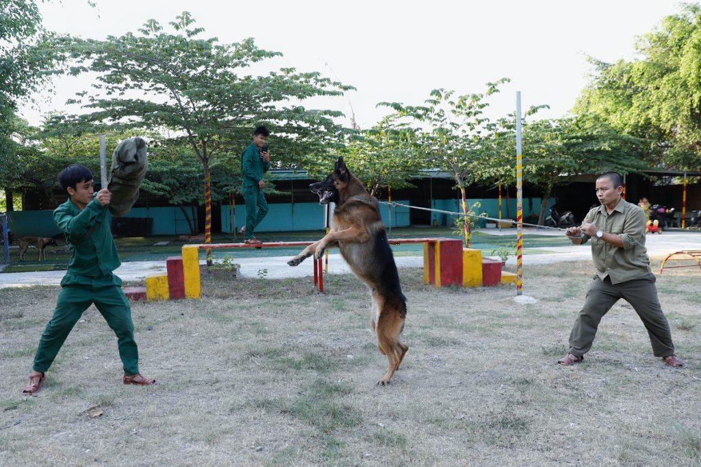 Tổng hợp các giống chó nghiệp vụ được nuôi nhiều nhất
