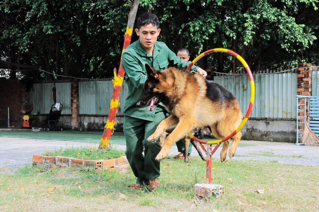 Trường huấn luyện chó chuyên nghiệp tại Tphcm